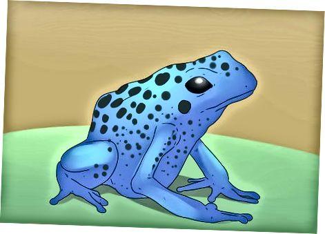 Memilih Pet Frog