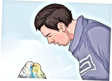 Decydowanie, czy dzikiego ptaka trzeba uratować