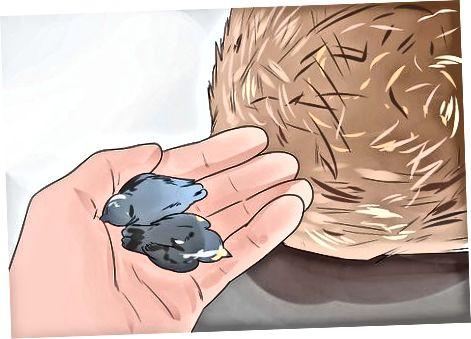 野生の赤ちゃんの鳥を救助する必要があるかどうかの判断