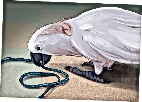 Αντιμετωπίζοντας τα χαρακτηριστικά Cockatoo