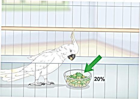 Σίτιση του Cockatoo σας