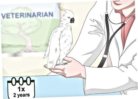 Mantenere la salute del tuo uccello
