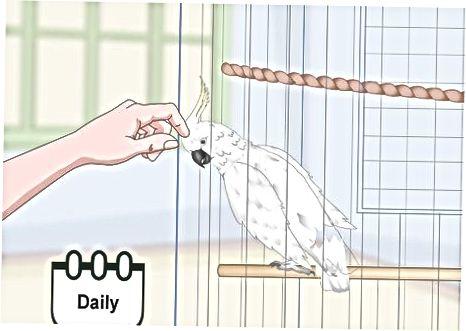 Δέσμευση του Cockatoo σας