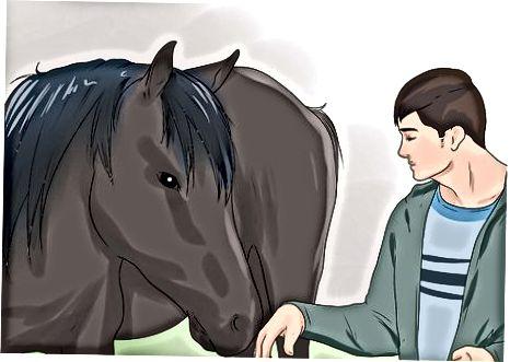 Mendekati Kuda dengan Aman