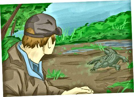 Reaccionando a un encuentro de cocodrilos