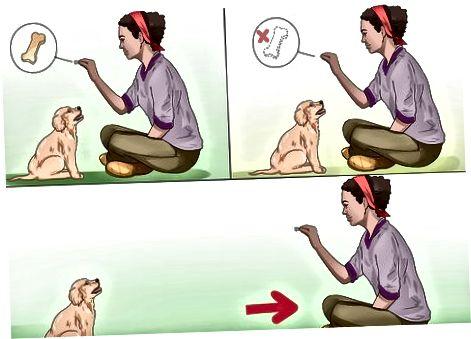 Entrenando la obediencia de su cachorro