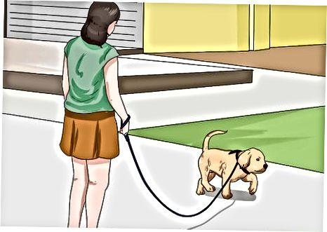 Entrenando en casa a tu cachorro