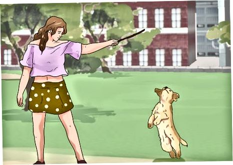 Correa Entrenando a tu cachorro
