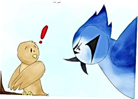 Comprendre les habitudes des Blue Jays