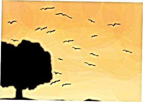 Comprender los hábitos de Blue Jays