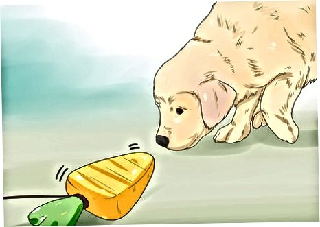 Enseñando a tu cachorro a buscar