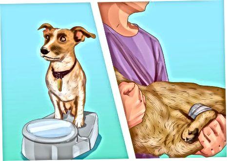 Evaluar los rasgos de tu perro
