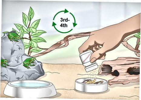 Alimentando a tu rana