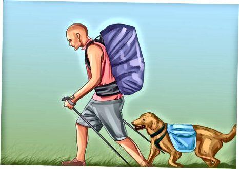 Entrenando a su perro para caminar