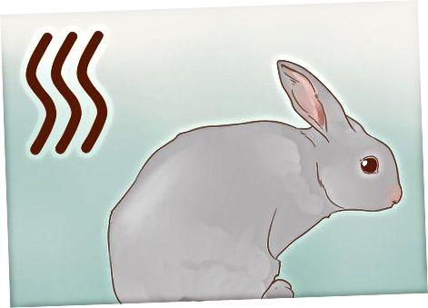 Zorgen voor een stinkend konijn