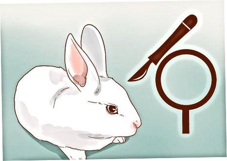 Cuidando de um coelho fedorento
