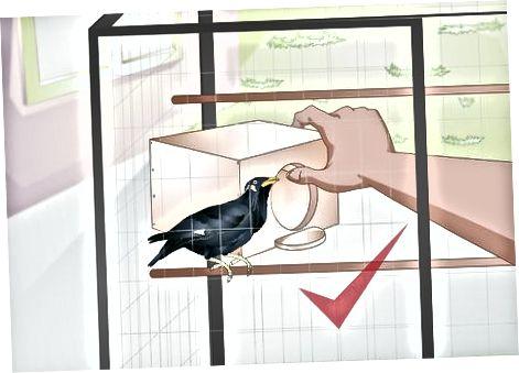თქვენი ფრინველის დაცვა ტოქსიკური საკვებიდან და მცენარეებიდან