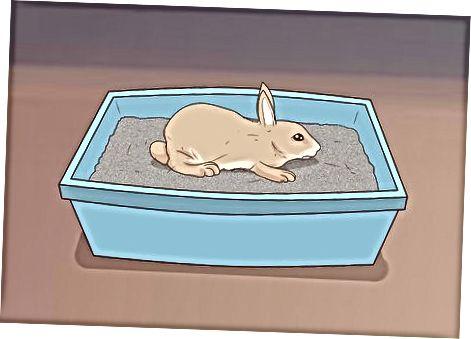 Tavşanı Keşfetmek