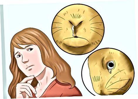 De oorzaak van niezen achterhalen