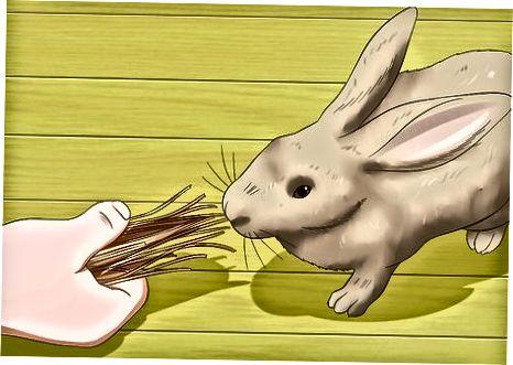 Att upprätthålla god hälsa hos din kanin