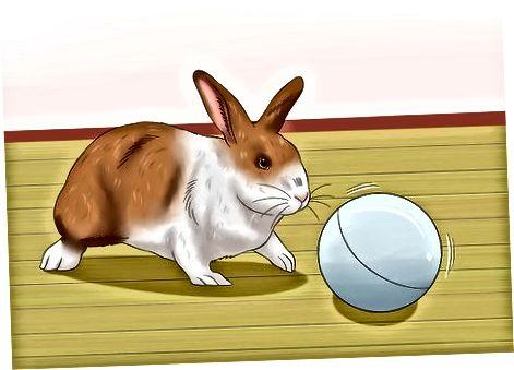 Een goede gezondheid van uw konijn behouden