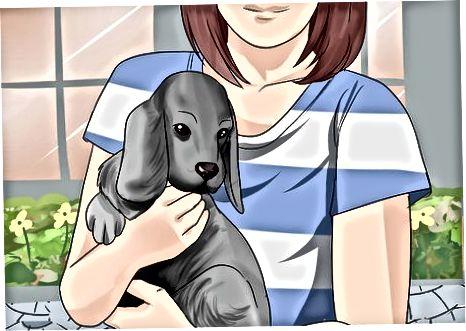 Levantando y sosteniendo un cachorro correctamente