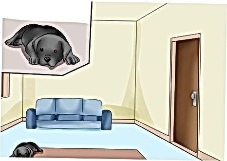 Preparando su hogar para un cachorro