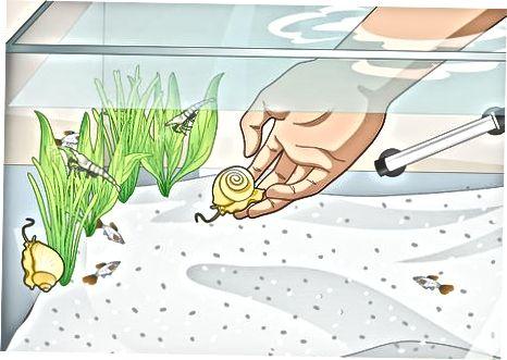 Membuat Ekosistem Bebas Alga
