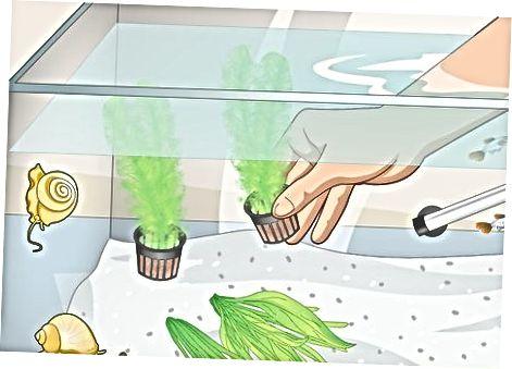 Een algenvrij ecosysteem creëren