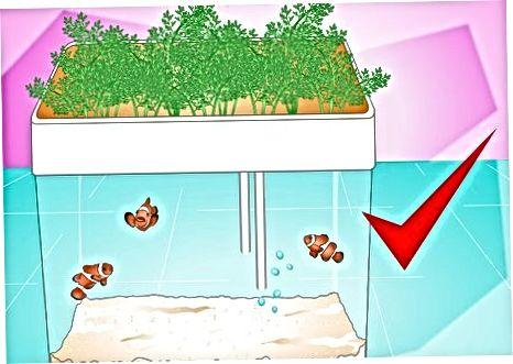 Prevención de la acumulación de algas