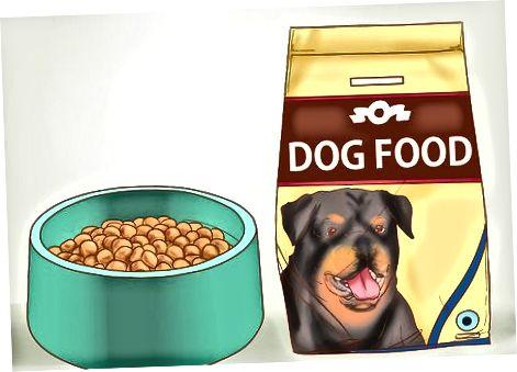 Alegerea mâncării pentru câinele dvs.