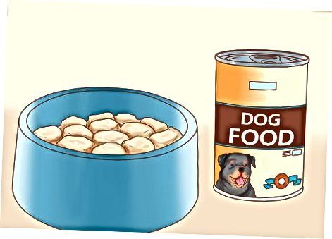 Elegir comida para tu perro