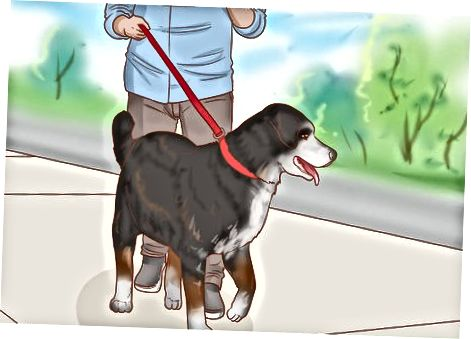 Exercitarea câinelui tău