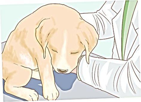 Ducându-ți cățelul la veterinar