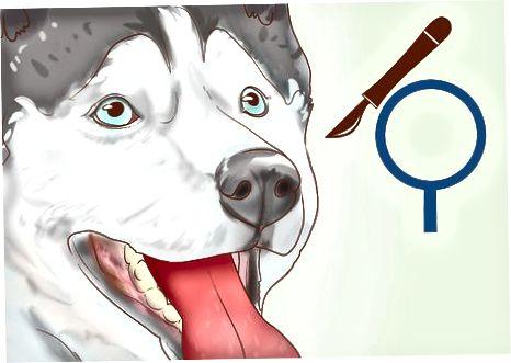 Llevando a tu cachorro al veterinario