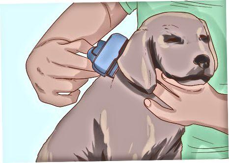 Cuidar la salud de tu perro en casa