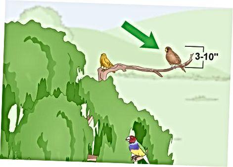 Distinguiendo los pinzones de otras aves