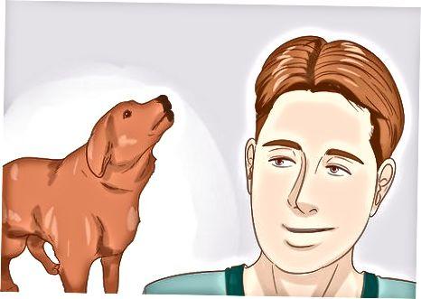 Întreținerea câinelui tău