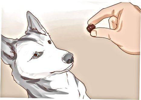 Socializando a tu perro