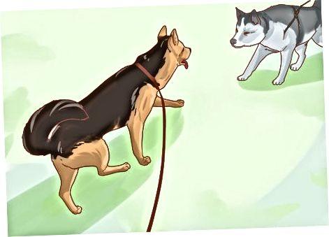 Socializarea câinelui tău