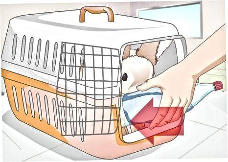 Trazendo seu coelho para casa