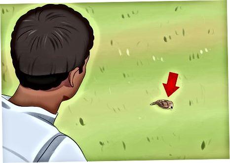 Zorgen voor een gewonde vogel