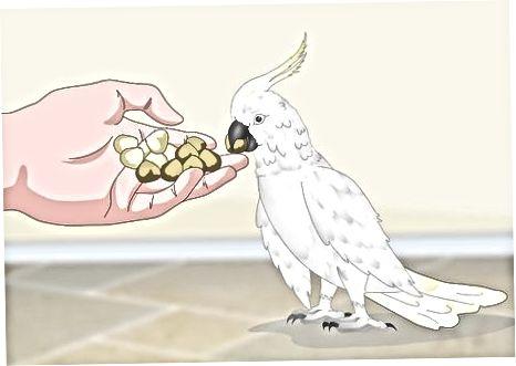 Dar comida ao seu pássaro