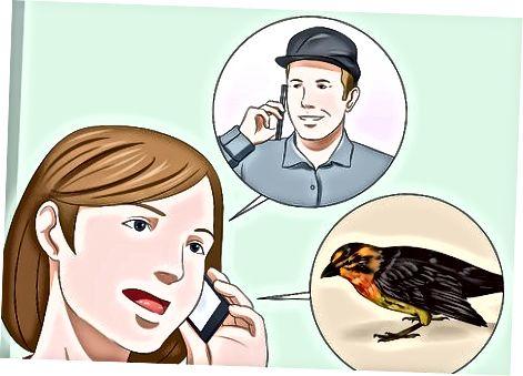 Skrb za poškodovano ptico