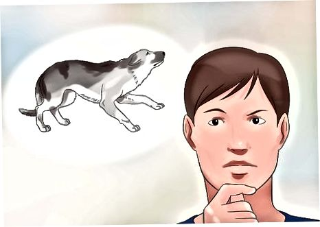 Gjenkjenne en fryktelig hund