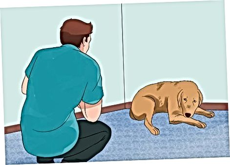 Beroligende en fryktelig hund