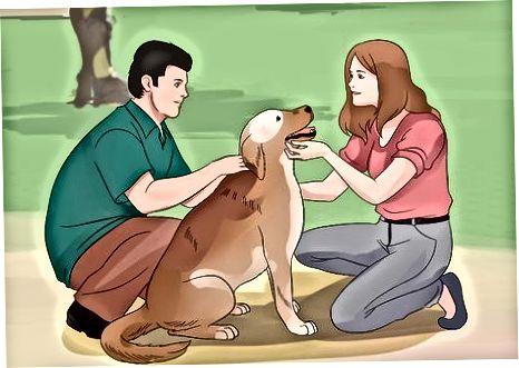 Gjenkjenne og berolige en sky hund