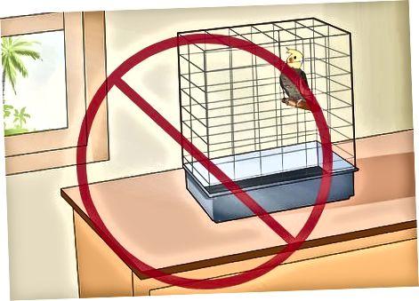Prevenir que su cacatúa ponga huevos