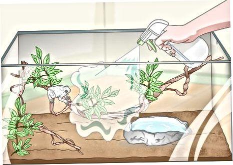 Manteniendo a tu rana sana y feliz
