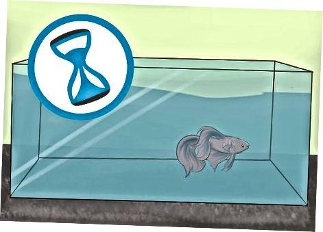 Garantizar la seguridad de su pez antes de viajar